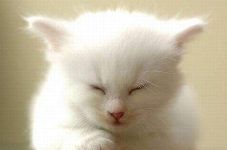 Котёнок-снежок