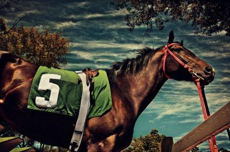 Лошадки от Kalle Gustafsson