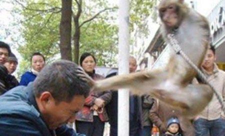 Животные атакуют!