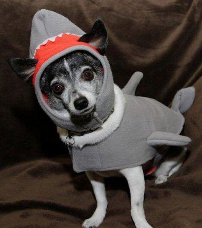Коты и собаки в костюмах акул