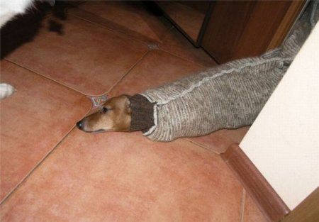 Собакозмей