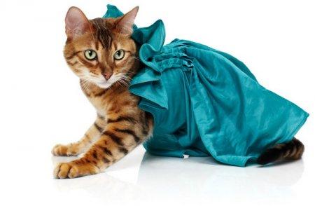 Кошки в одежде от Noah Sheldon