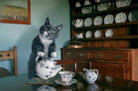 Кошка-домохозяйка