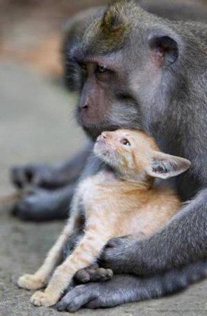 Обезъяна и котёнок