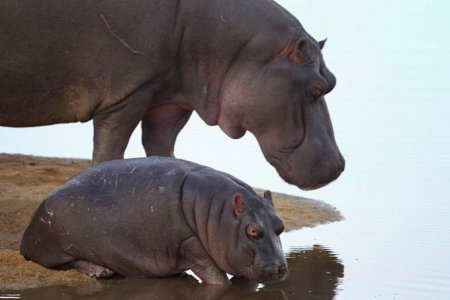 Животные на сафари