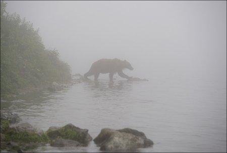 Медведи в тумане