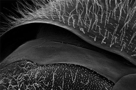 Пчела под микроскопом