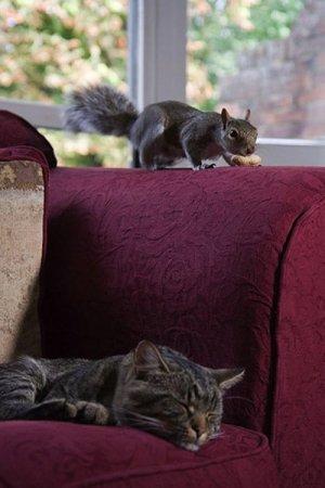 Наглая белка и кот