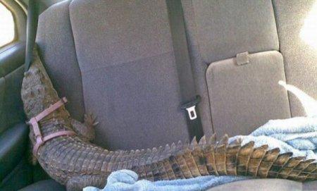 Домашний крокодильчик