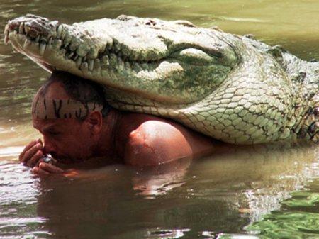 Дружба с крокодилом