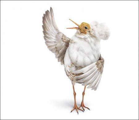 Оперные птицы от студии Aorta