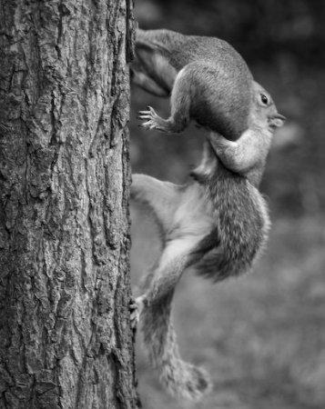 Забавные животные от Martin Usborne