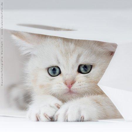 Котята от Jana Weichelt