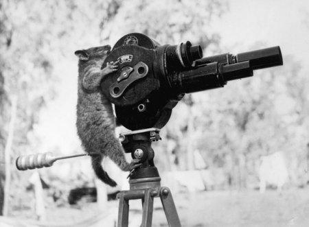 Животные-фотографы