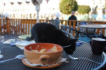 Наглый чешский кот