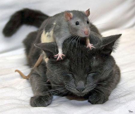 Самые умные животные на Земле