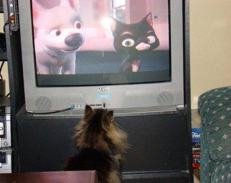Домашние животные тоже смотрят телевизор