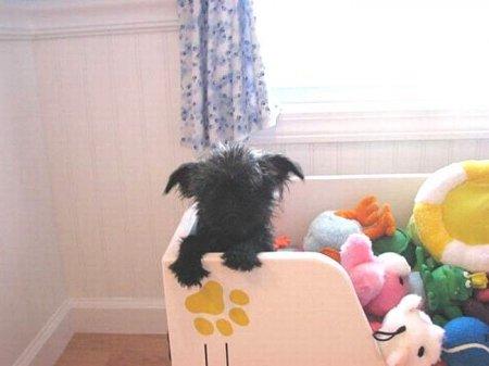 Супер-будка для собачки