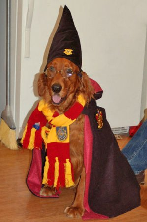 Питомцы фанатов Гарри Поттера