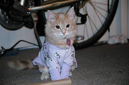 Забавные кошки в пижамах