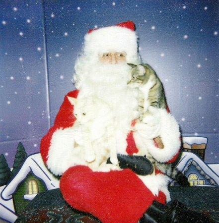 Санта-Клаус и кошки