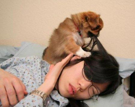 Попытка разбудить хозяйку