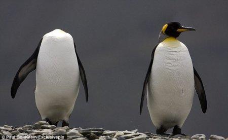 Пингвины тоже умеют прятаться