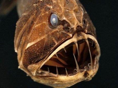 Самые страшные рыбы