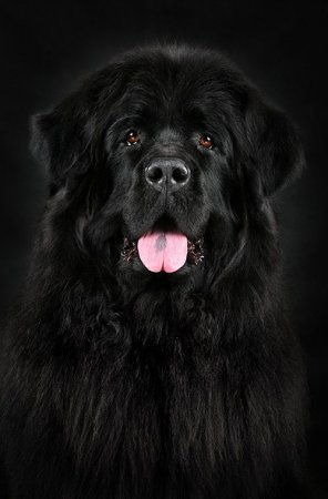 Черное на черном