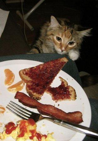 Коты и бекон