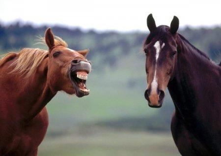 Забавные лошадки