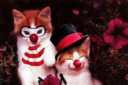 Животные как клоуны