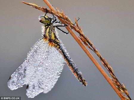 Гламурные стрекозы