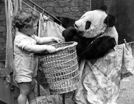 Приключения больших панд в Англии