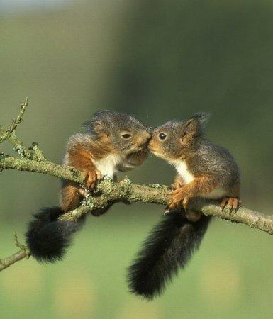 Крохотные животные