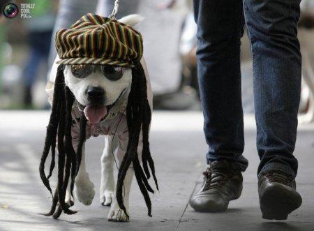 Вот такие нарядные собаки