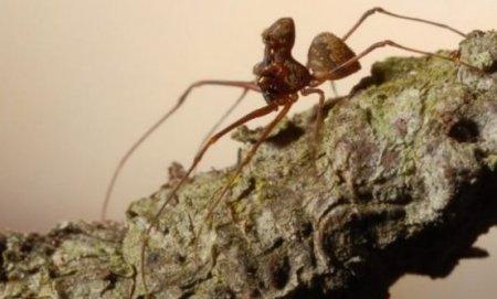 Мадагаскарский паук