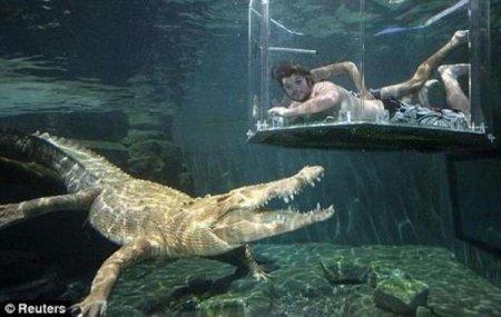 Погружение с крокодилами