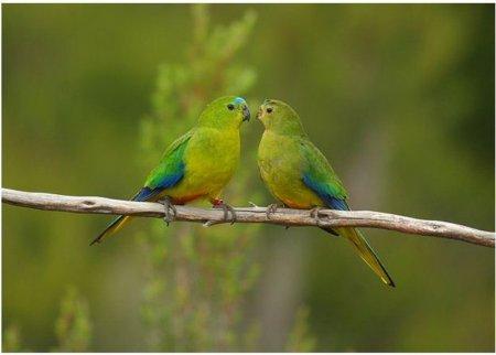 Очень редкие птицы