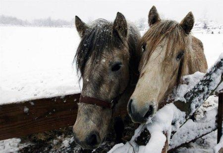 Фото животных за январь