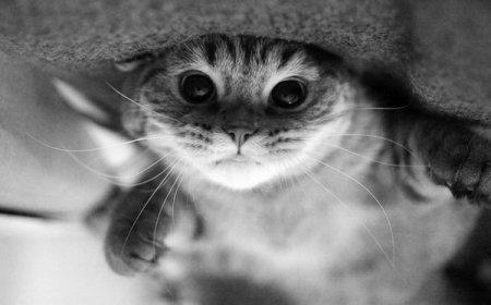 Позитивные котики