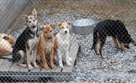 Райский уголок для бездомных животных