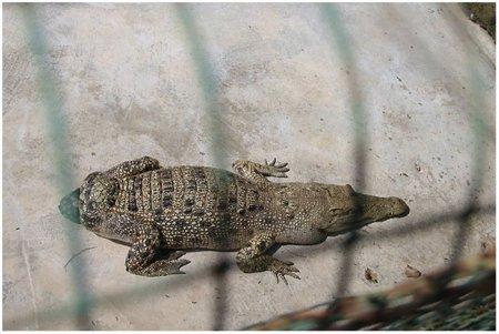 Крокодиловая ферма Crocodile Farm Langkawi
