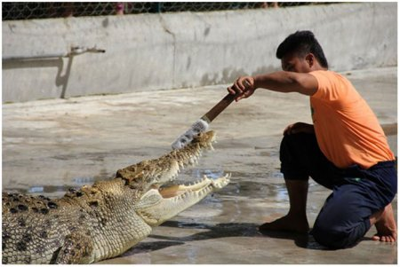 Крокодиловая ферма Crocodile Farm Langkawi