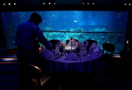 Aqua City - дом для морских обитателей