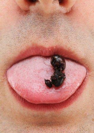 Гигантские жаренные муравьи