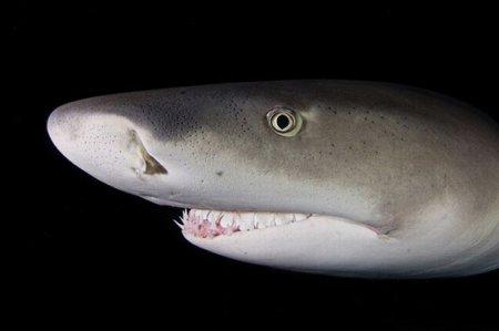 Безобидные акулы