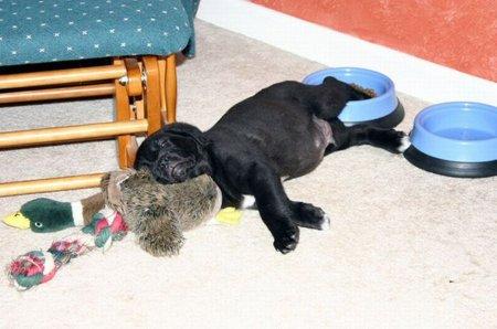 Заснувшие собаки