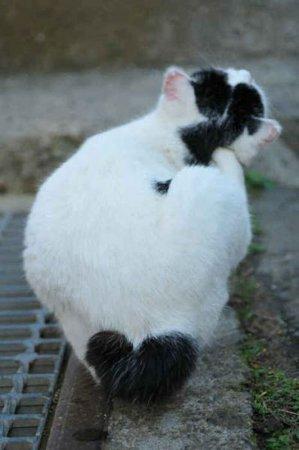 Коты со знаковыми сердечками