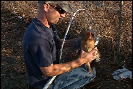 Сезон охоты на куриц объявлен открытым